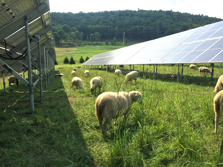 Benefits of solar farms
